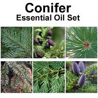 Conifer Essential Oil Set, 5 mL