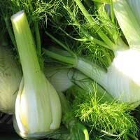 Fennel Sweet Organic Essential Oil