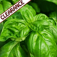 Basil Sweet Essential Oil CLEARANCE
