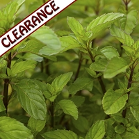 Bergamot Mint Essential Oil CLEARANCE