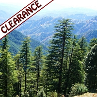 Cedarwood Himalayan (India) Essential Oil CLEARANCE