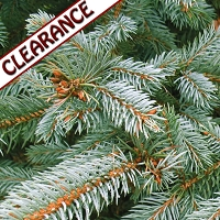 Silver Fir Essential Oil CLEARANCE