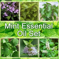 Mint Essential Oil Set, 15 mL