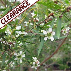 Lemon Tea Tree Essential Oil CLEARANCE