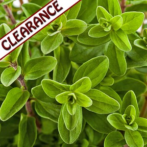Marjoram Sweet Organic Essential Oil CLEARANCE