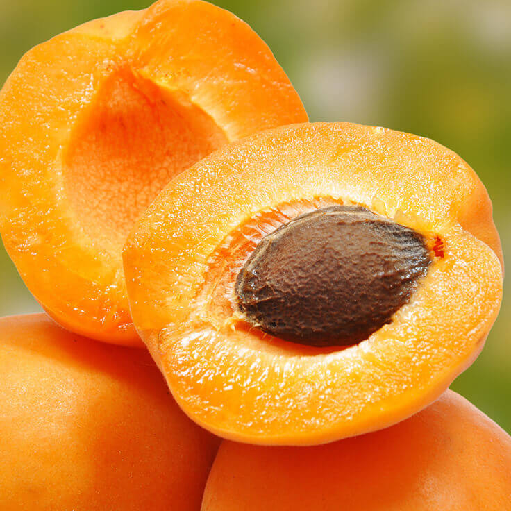 Apricot Kernel Oil, Virgin