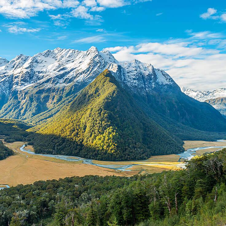 Douglas Fir Essential Oil New Zealand