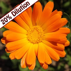 Calendula Co2 Extract 20%