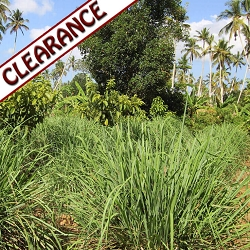 Lemongrass schoenanthus Essential Oil CLEARANCE