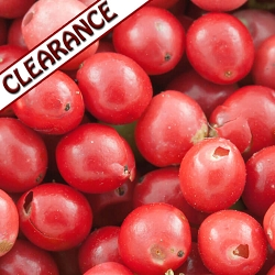 Pink Peppercorn Essential Oil CLEARANCE