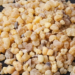 Frankincense papyrifera Resin