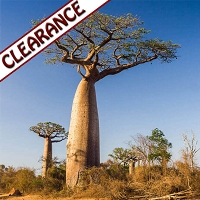 Baobab Seed Oil, Virgin CLEARANCE 4 oz