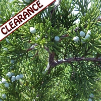 Cedarwood virginiana Essential Oil CLEARANCE