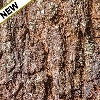 Kaffir Lime Leaf Essential Oil