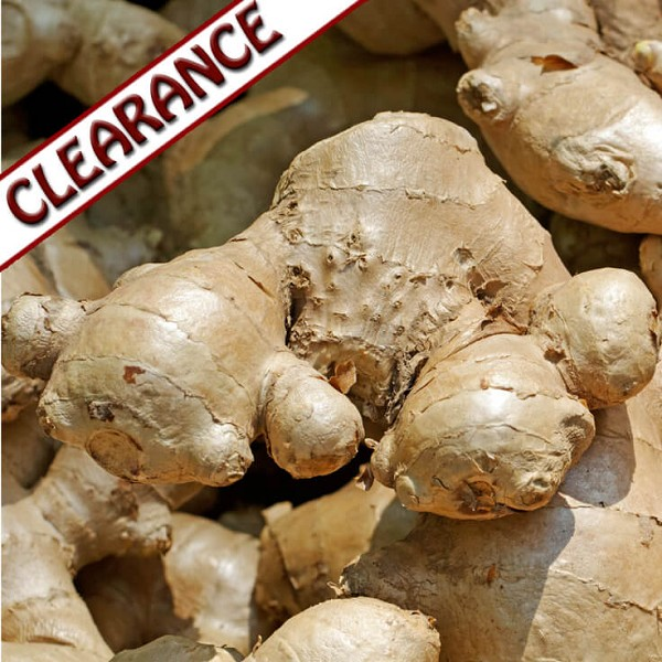 Ginger Essential Oil CLEARANCE