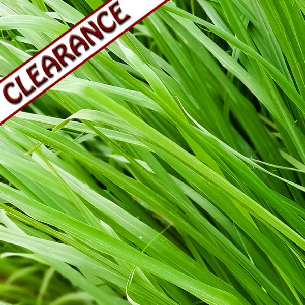 Gingergrass Essential Oil CLEARANCE