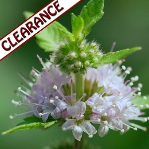 Peppermint Premium Essential Oil CLEARANCE