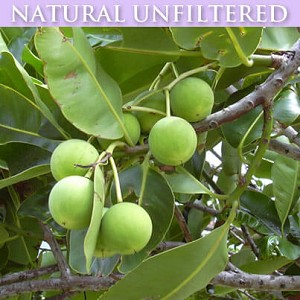 Foraha (Tamanu) Oil Organic (Unfiltered)