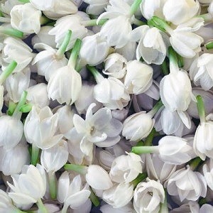 Jasmine Grandiflorum Absolute 10%