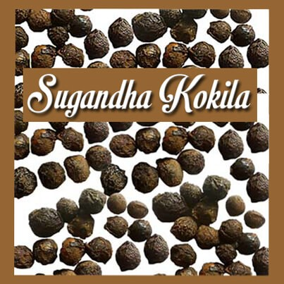 Sugandha Kokila Essential Oil